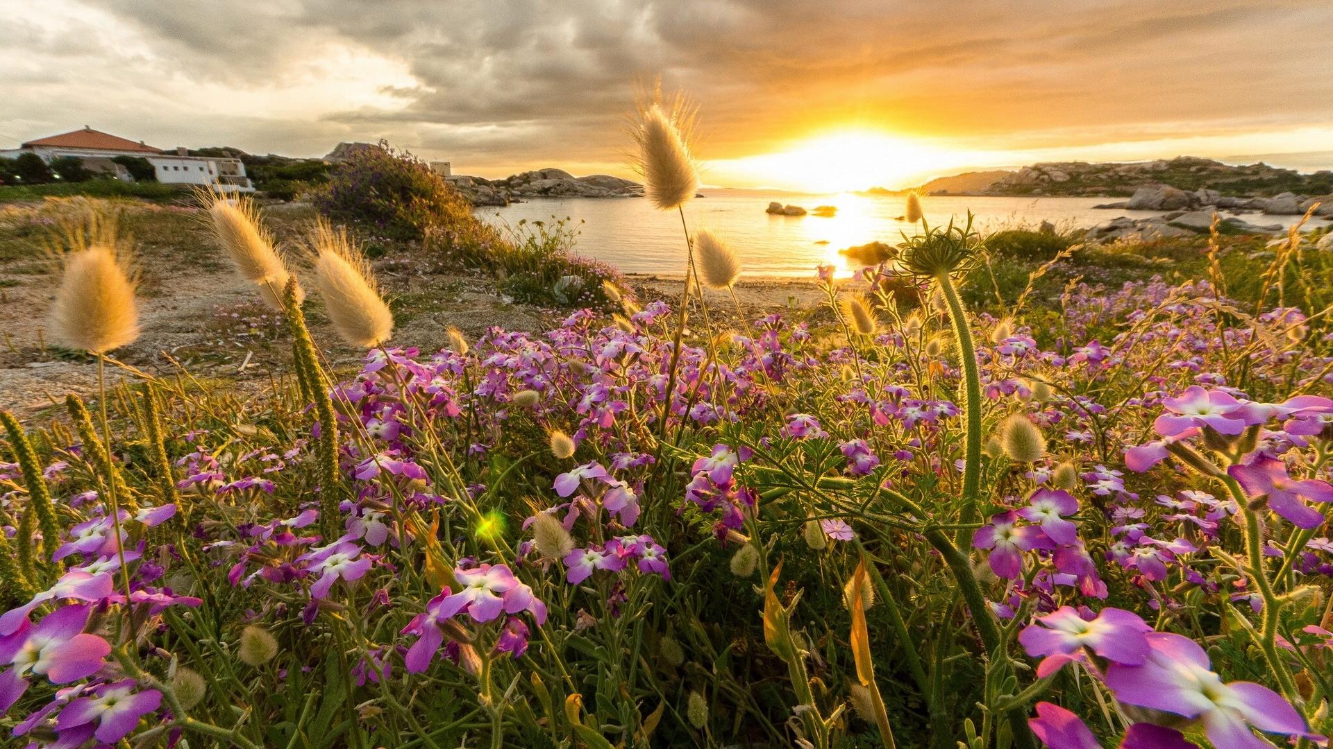 Фото красивой природы и цветов на рабочий стол 131