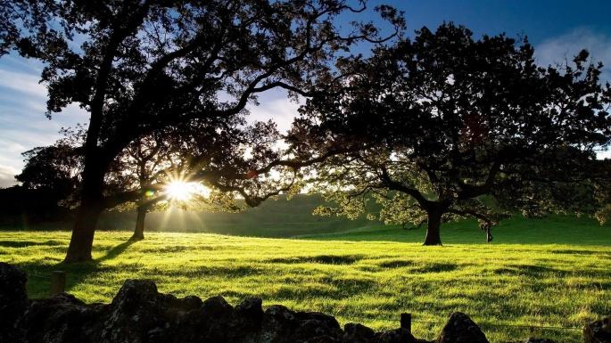Природа. 50 чудесных фотокартин на тему Времена года. Весна (50 обоев)