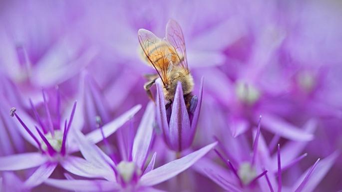 Цветы. Сиреневые нотки (30 обоев)