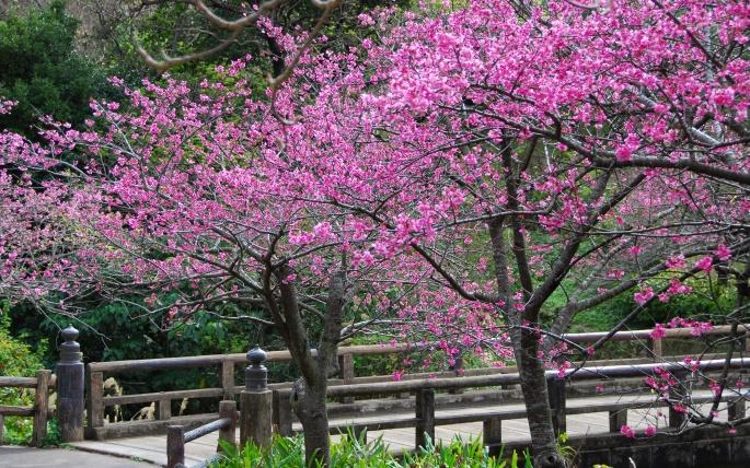 Удивительная Япония (276 обоев)