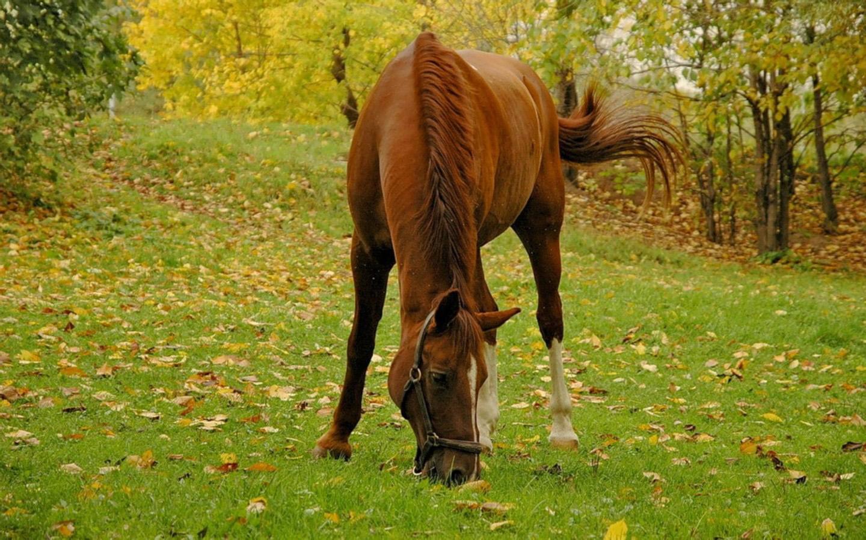 Картинка лошадь есть траву