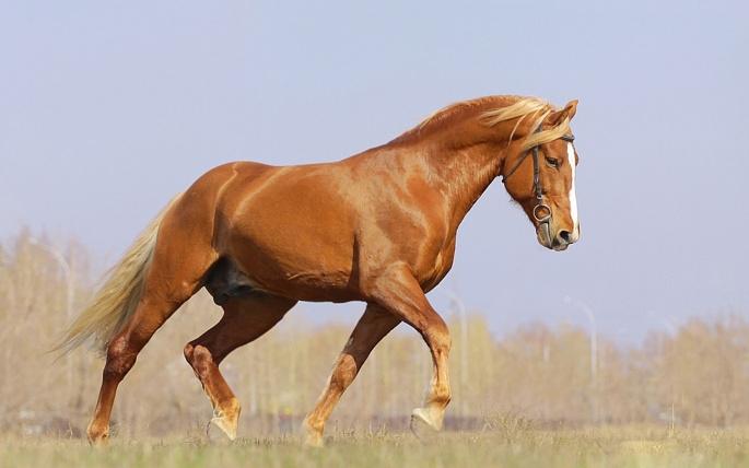 Лошадки (149 обоев)