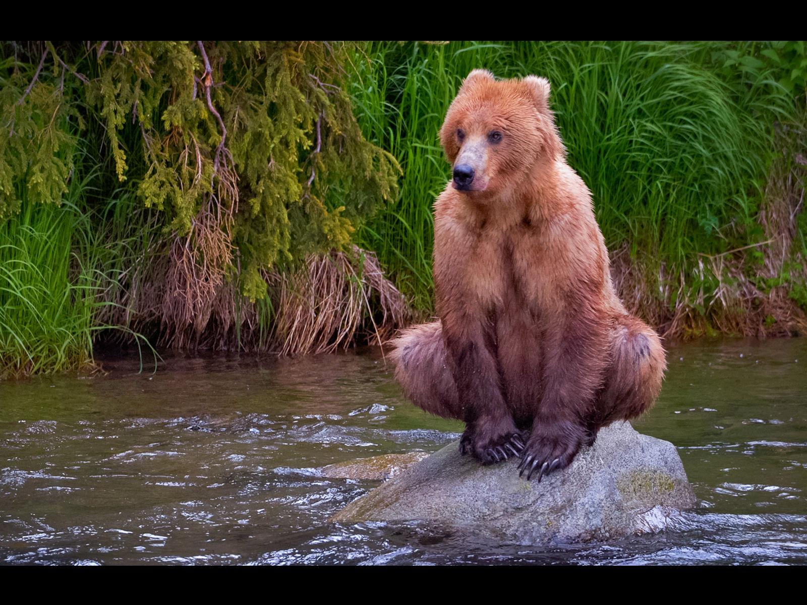 Хуй у медведя вернемся теме