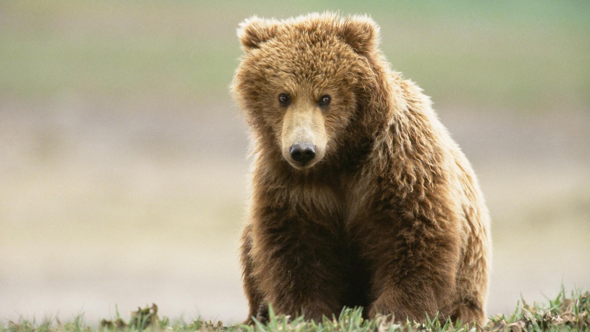 Картинки и карикатуры про медведей 93