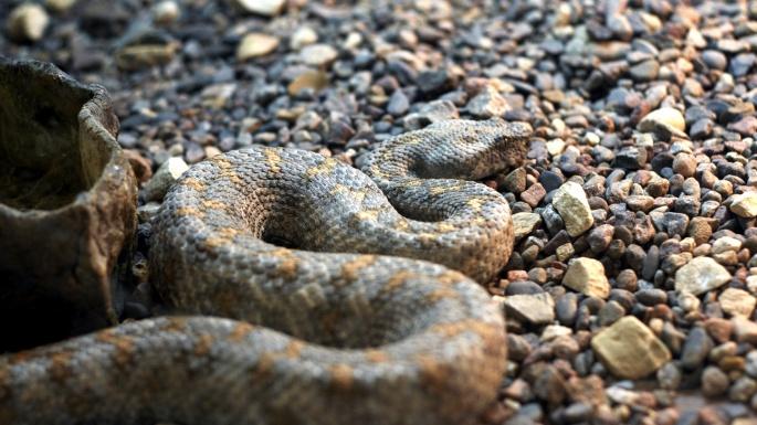 Рептилии. Серпентарий (45 обоев)