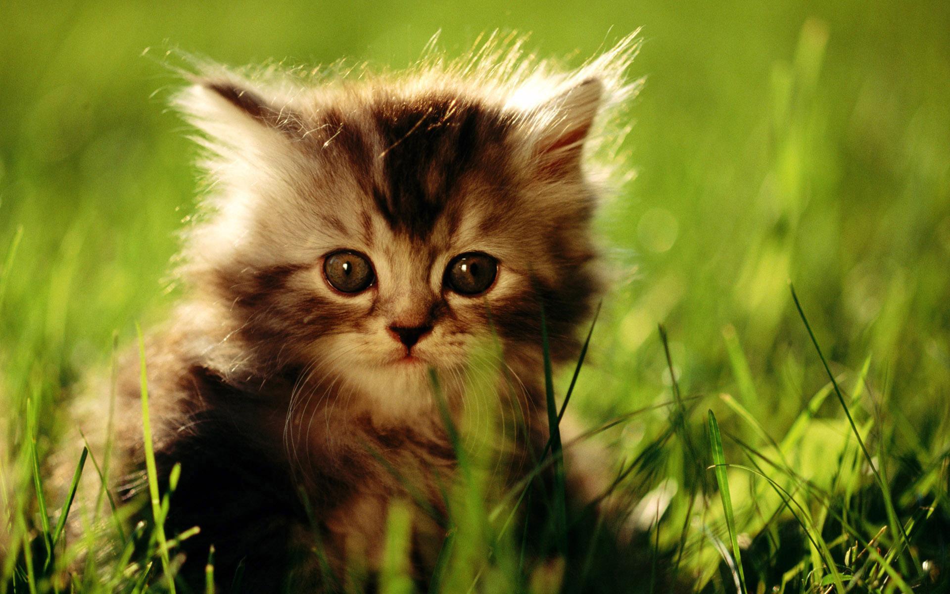 основе питания живые обои на рабочий стол коты пк, качественные