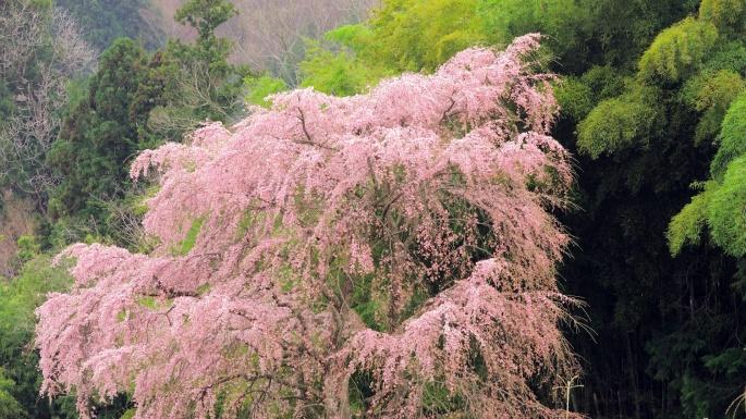 Страны. Япония в деталях. Цветение сакуры (100 обоев)