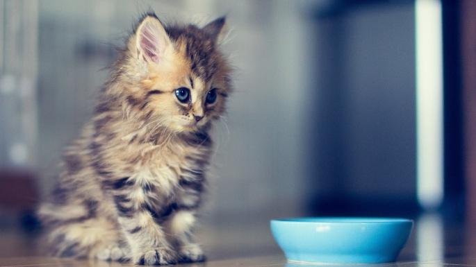 Кошки. 50 чудесных фотообоев с прелестными котятами (50 обоев)