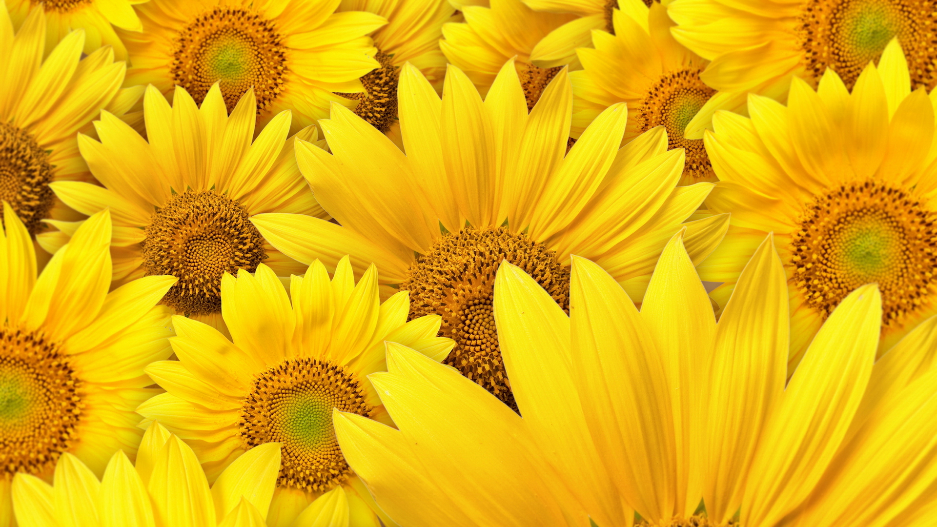 Цветы желтые красивые