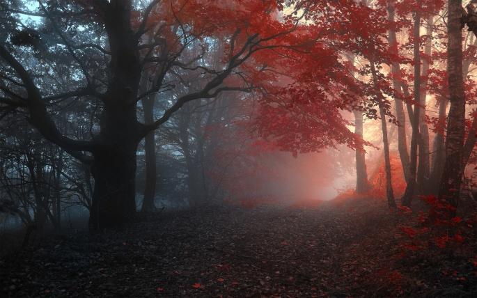 Осень (107 обоев)