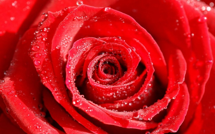 День Валентина 1 (156 обоев)