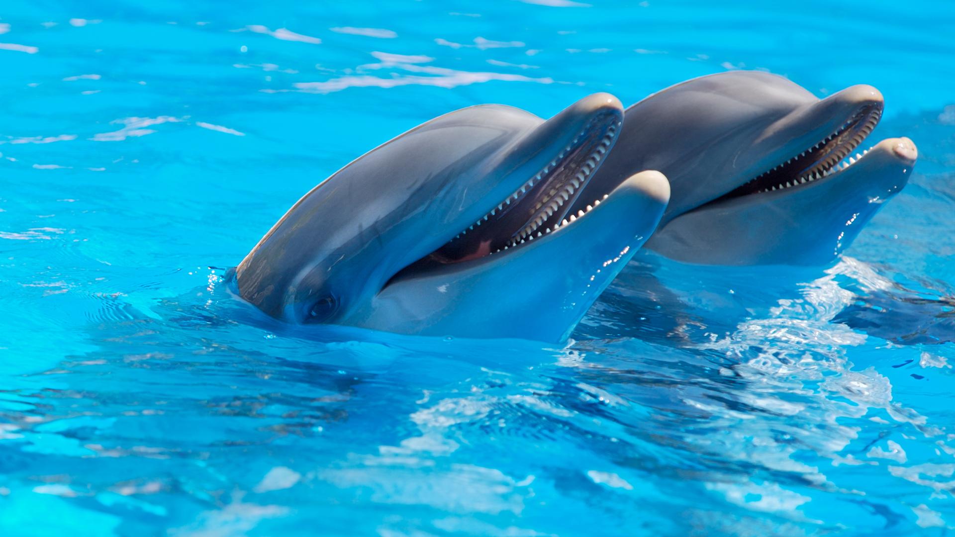 Подводный мир весёлые дельфины 50