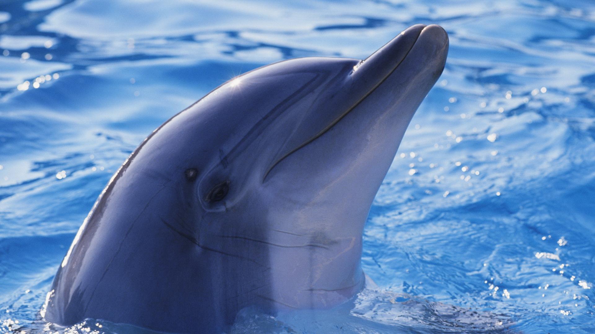 Дельфин они руками своими
