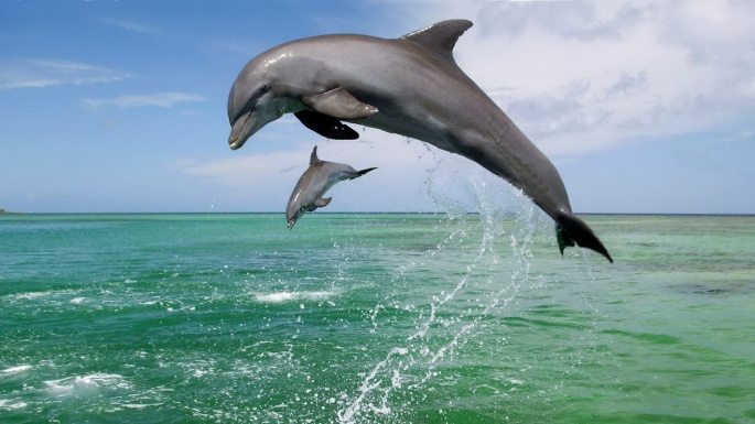 Подводный мир. Весёлые дельфины (50 обоев)