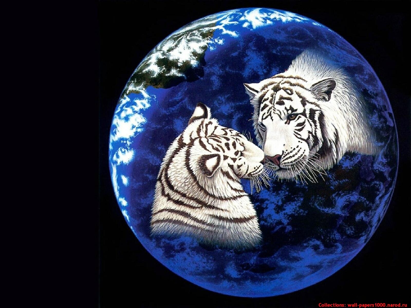 analysis white tiger