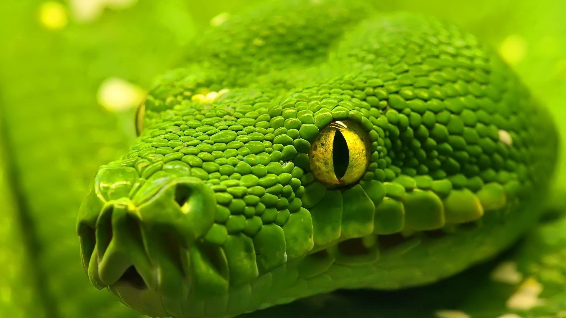Укусы змей и пауков: первая помощь, и что нельзя делать при укусе