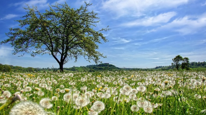 Природа. 50 чудесных фотокартин на тему Времена года. Лето (50 обоев)