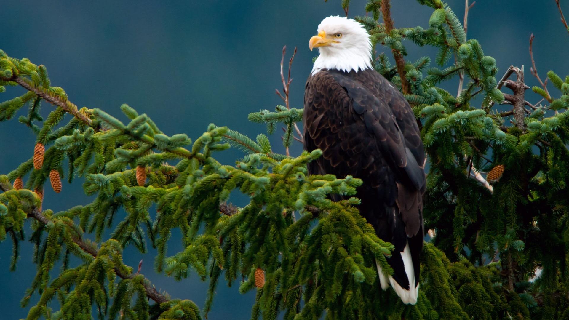 Орел сидит на дереве