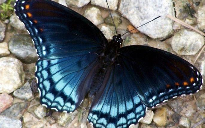 Бабочки 1 (60 обоев)