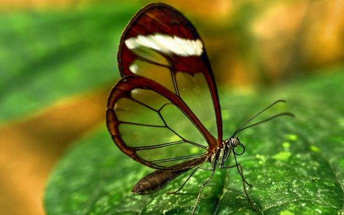 Бабочки 2 (90 обоев)