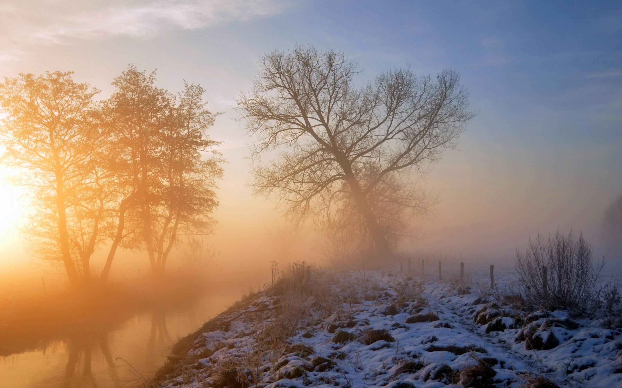 Обои елка, туман, утро. Природа foto 16