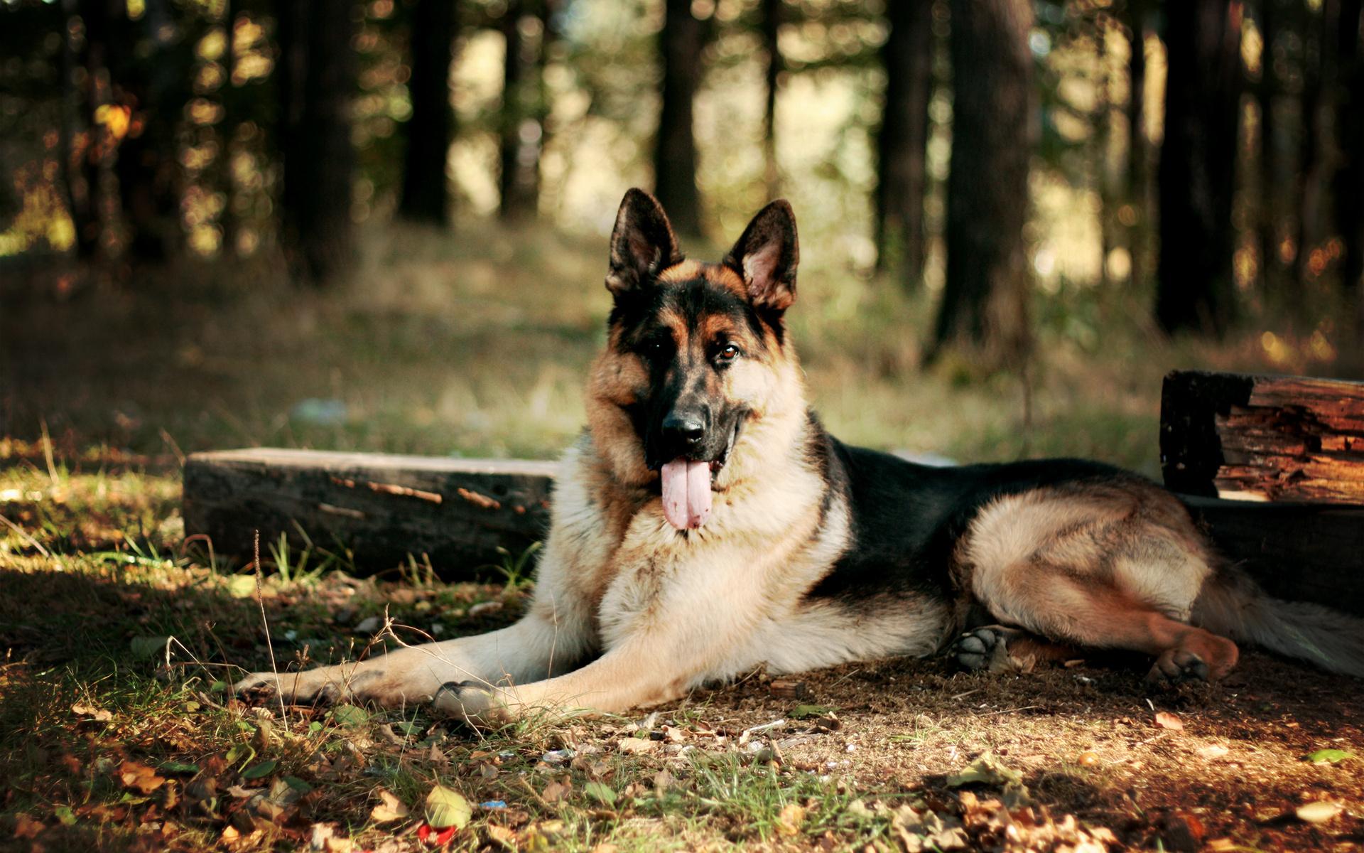 махачкалы красивые фото собак на рабочий стол на весь экран сети заявили, что