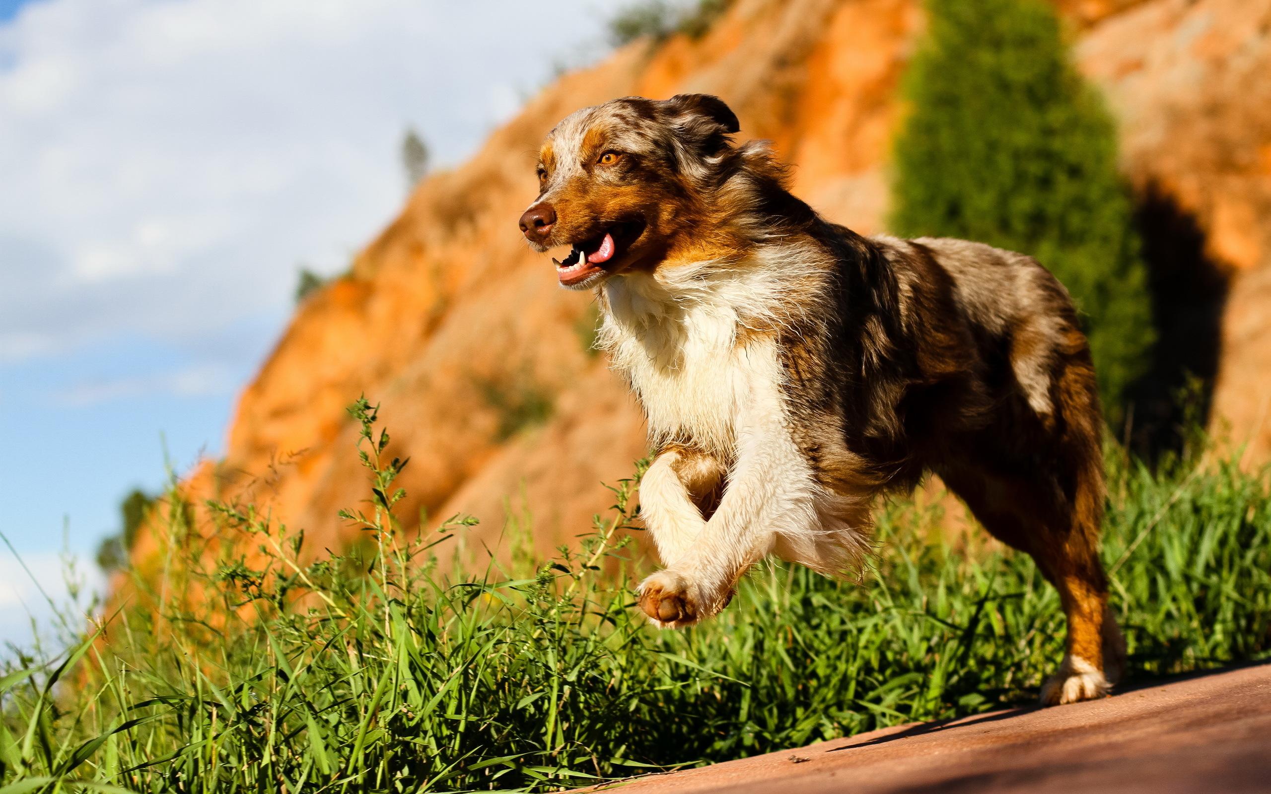 основу картинки бегущей собаки с боку решили