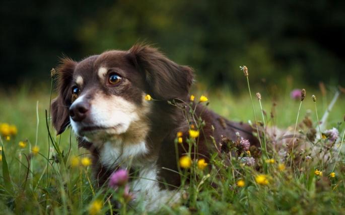 Собаки. Dogs (689 обоев)