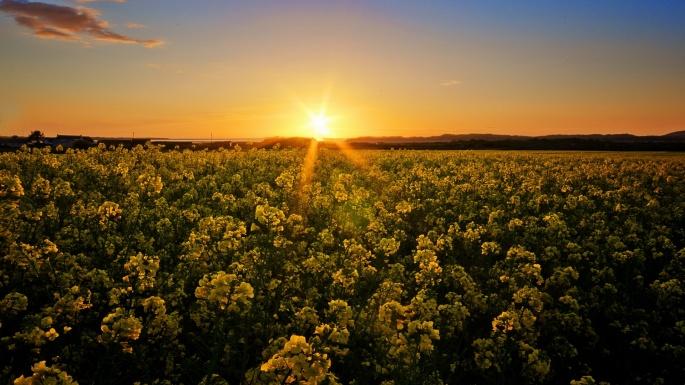 Солнце. The sun (200 обоев)