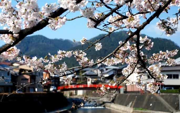 Япония, Осень, Сакура. Japan, Fall, Sakura (212 обоев)