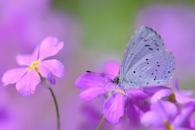 Бабочки. Butterfly (85 обоев)