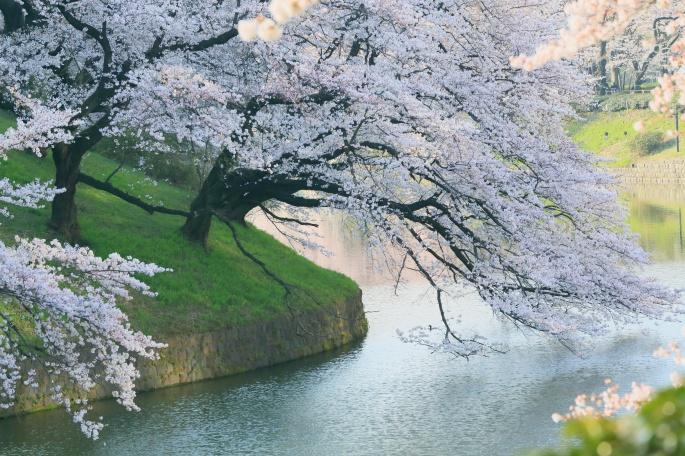 Весна. Spring (45 обоев)