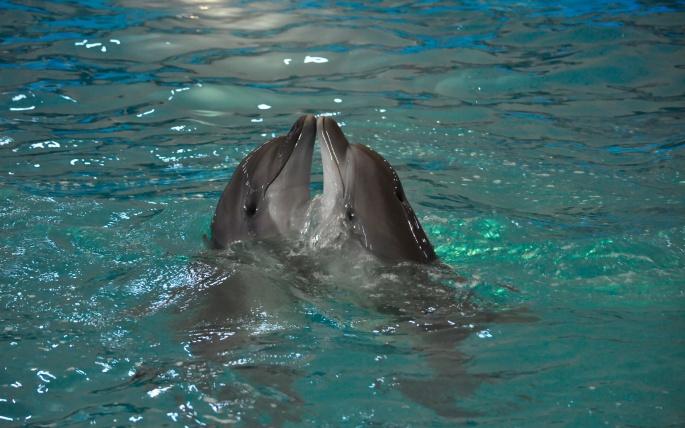 Дельфины. Dolphins (82 обоев)
