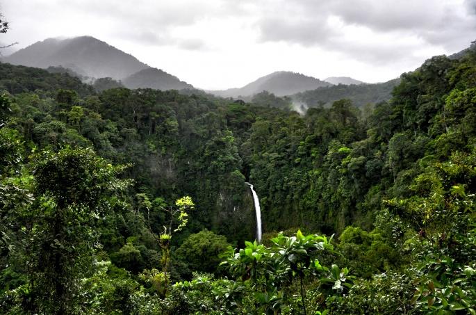 Джунгли. Jungle (55 обоев)