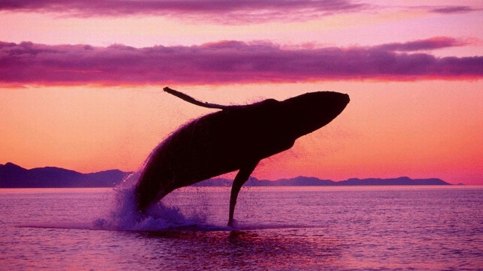 Кит. Whale (56 обоев)