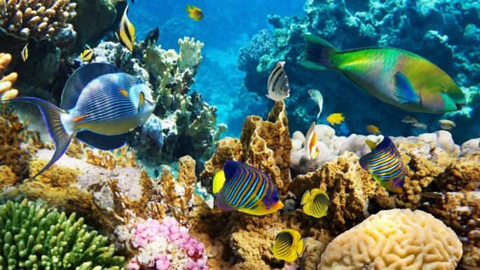 Коралловый риф. Coralreef (50 обоев)