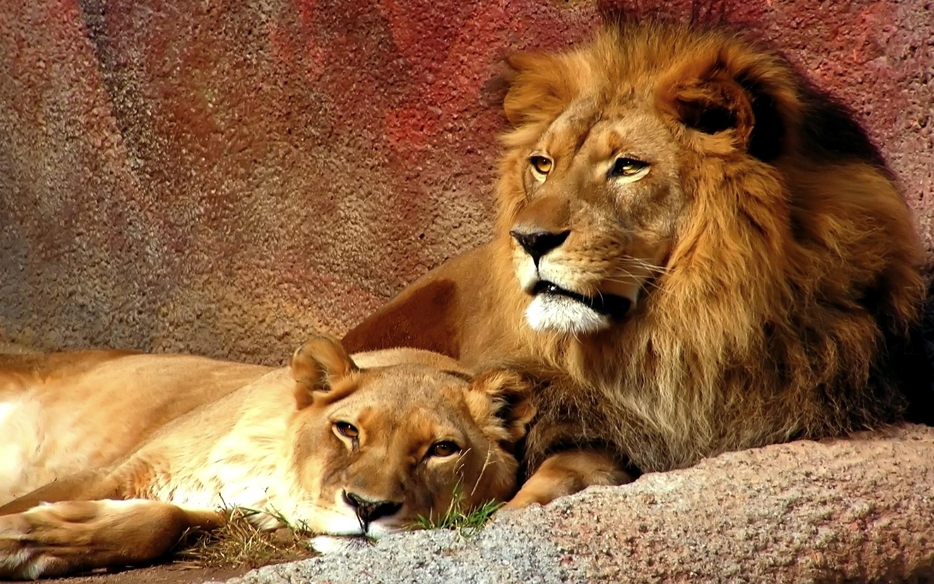 Мой мужчина лев картинки