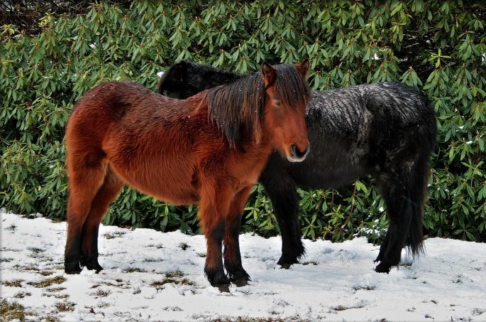 Лошади. Horse (59 обоев)