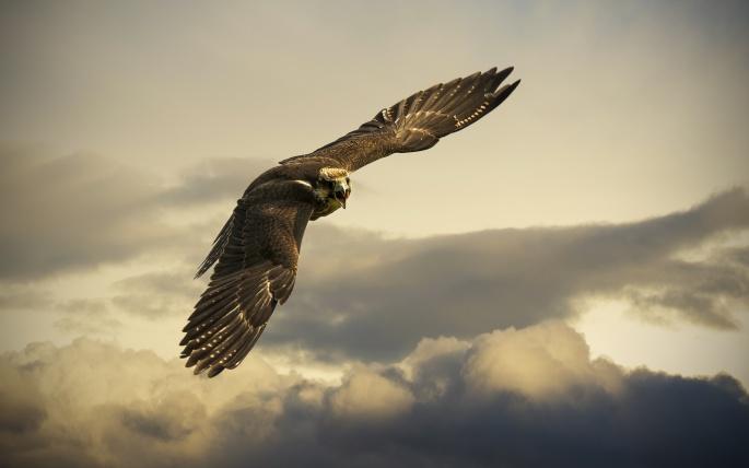 Орел. Eagle (117 обоев)