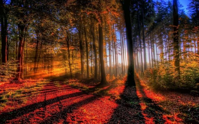 Осень. Fall (168 обоев)