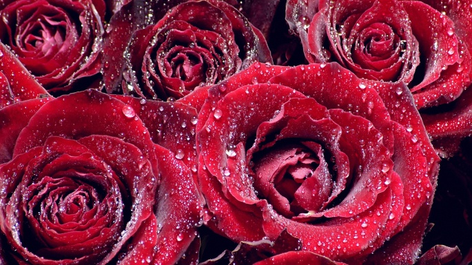 Роза. Rose (96 обоев)
