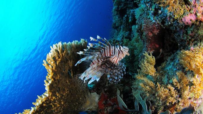 Коралловые рифы (10 обоев)