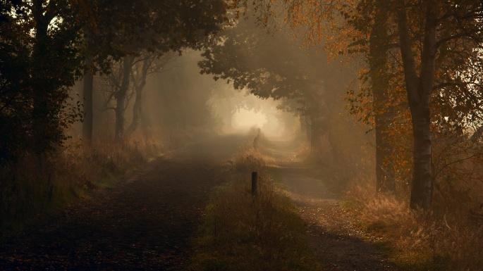 Лесовозная дорога (65 обоев)