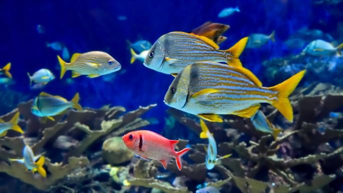 Коралловые рифы. Часть 2 (11 обоев)