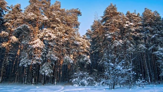 Лес (230 обоев)