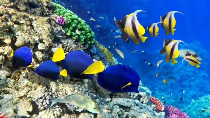 Коралловые рифы. Часть 3 (10 обоев)