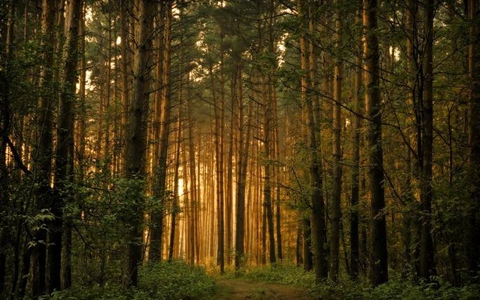 Лесные обои (60 обоев)