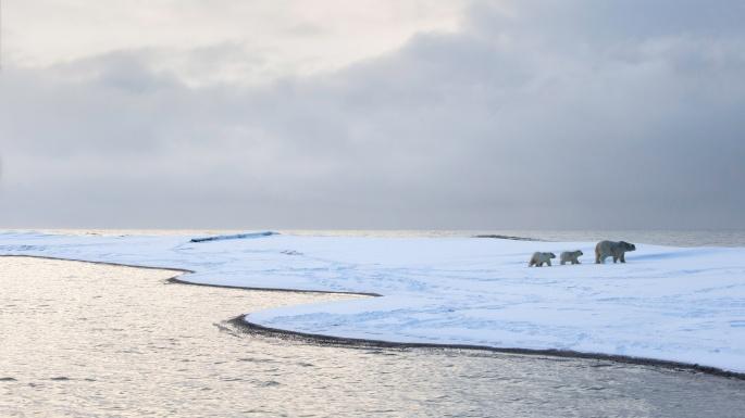 Медведи на Севере (51 обоев)