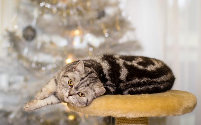 Коты. Cats (628 обоев)