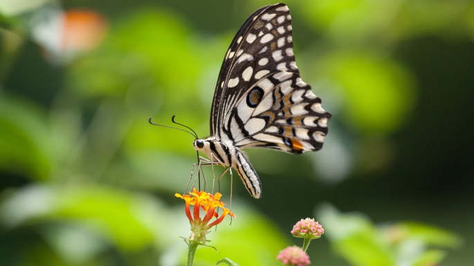 Бабочки. Butterflies (70 обоев)